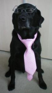 www.law4dogs.co.uk
